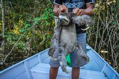 Trägheit mit einem lokalen Jungen im Amazonas-Regenwald, Manaos, Brasilien Stockfoto