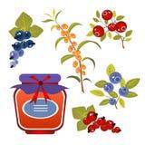 Trägt jam-04 Früchte Stockbild
