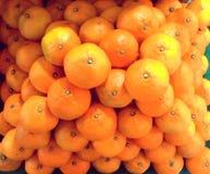 Trägt Orange Früchte Stockfotografie