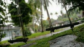 Trägunga med suddighetsbakgrund Fotografering för Bildbyråer