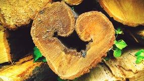 Trähög i skogen som är klar för vintertid Hjärta-formad fred av huggit av trä royaltyfria foton