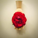 Trähand som rymmer en röd ros Royaltyfria Bilder
