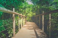 Trähimmel går, eller gångbanan korsar över treetopen som omges med grön naturlig och solljusbakgrund Arkivbild