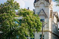 Trähus nära kastanjen Royaltyfri Fotografi