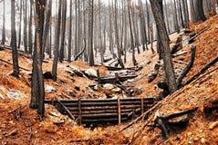 Träig skräpfördämningar för naturlig flod riskerar förminskning royaltyfri fotografi