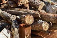Träjournaler av sörjer trän i skogen Royaltyfri Bild