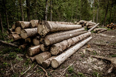 Träjournaler med skogen på bakgrundsstammar av träd som klipps och staplas i förgrunden, grön skog i bakgrunden Royaltyfria Bilder