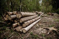 Träjournaler med skogen på bakgrundsstammar av träd som klipps och staplas i förgrunden, grön skog i bakgrunden Arkivfoto