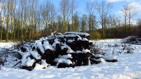 Träjournaler och Brances för snö dolda i Forest During Winter arkivfoton