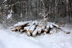 Träjournaler under snö Royaltyfri Bild