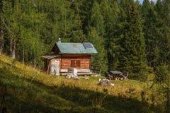 Träkabin på slingan till Croda da Lago i ` Ampezzo för Cortina D, arkivfoto