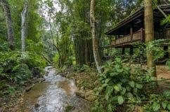 Träkoja i djungel Royaltyfria Foton