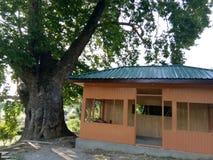 Träkojor på Mansbal under konstruktion Arkivbild
