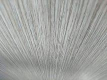Träkornbakgrund Royaltyfria Foton