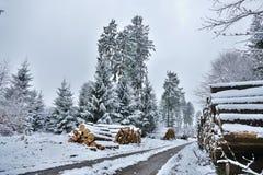 Träkubbar i skogen som täckas i snowPiles av skördade stammar som täckas i snö med prydliga träd i backgroundPilesna av arkivbilder