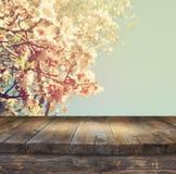Trälantlig tabell framme av trädet för körsbärsröda blomningar för vår det vita tappning filtrerad bild produktskärm och picknick royaltyfri foto