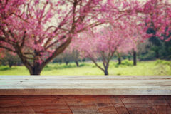Trälantlig tabell framme av trädet för körsbärsröda blomningar för vår retro filtrerad bild produktskärm och picknickbegrepp royaltyfri bild