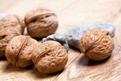 trälantliga valnötter för bräde Royaltyfria Foton
