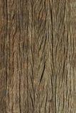 trämörk textur brunt texturträ gammala paneler för bakgrund lantlig bakgrund Tappning färgad yttersida Fotografering för Bildbyråer
