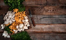 Trämagasinet med den rå ostron och kantarellen plocka svamp på trätabellen kopiera avstånd för din text baner royaltyfria foton