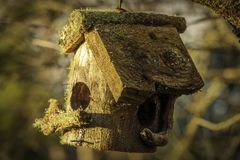 Trämossa täckt fågelhus royaltyfria foton