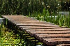 Trämycket liten bro över träsk Royaltyfria Bilder