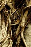 trän Royaltyfri Fotografi
