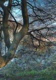 trän Arkivbilder