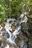 trän för aldigeitaly vattenfall arkivfoton
