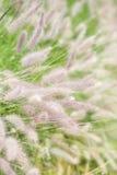 trän för fjäder för blommaäng någonstans Arkivfoto