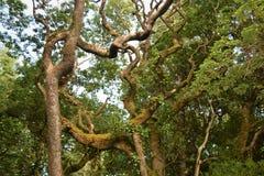 Trän i en Forest Park, Co Donegal Irland royaltyfri bild