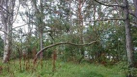 Trän i nedgången Royaltyfri Fotografi