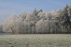Trän i vintertid med frostade träd Royaltyfria Bilder