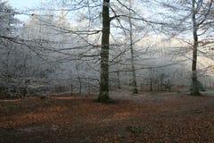 Trän i vintertid med frostade träd Arkivfoto