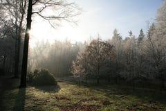 Trän i vintertid med frostade träd Arkivbild