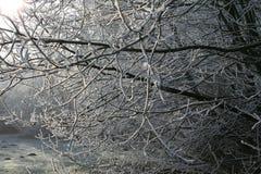 Trän i vintertid med frostade träd Royaltyfri Fotografi