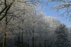 Trän i vintertid med frostade träd Fotografering för Bildbyråer