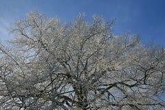 Trän i vintertid med frostade träd Royaltyfria Foton