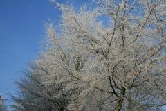 Trän i vintertid med frostade träd Arkivfoton
