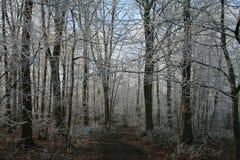 Trän i vintertid med frostade träd Royaltyfri Bild