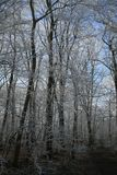 Trän i vintertid med frostade träd Royaltyfri Foto