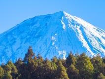 Trän och härlig snowcapped Mount Fuji blå himmel Arkivbild