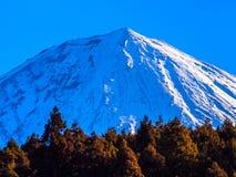Trän och snowcapped Mount Fuji blå himmel Royaltyfri Foto