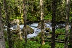 Trän på den Tatra nationalparken Arkivbilder