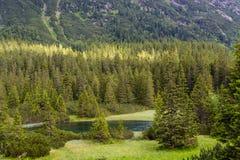 Trän på den Tatra nationalparken Royaltyfria Bilder