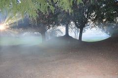 Träna i dimman Arkivfoton