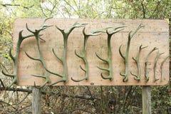 Träpanel med flera hjorthorn på kronhjort arkivbilder