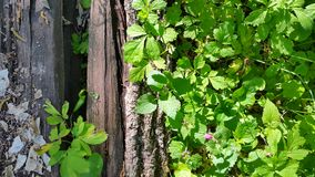 träpelare i växter spelrum med lampa Arkivfoton