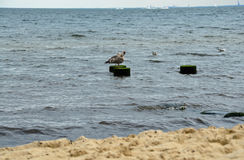 Träpelare med en havsfiskmås på royaltyfri fotografi