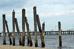 Träpelare vid Östersjön Royaltyfri Bild